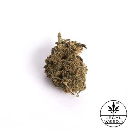 alexis haze cannabis light legal weed