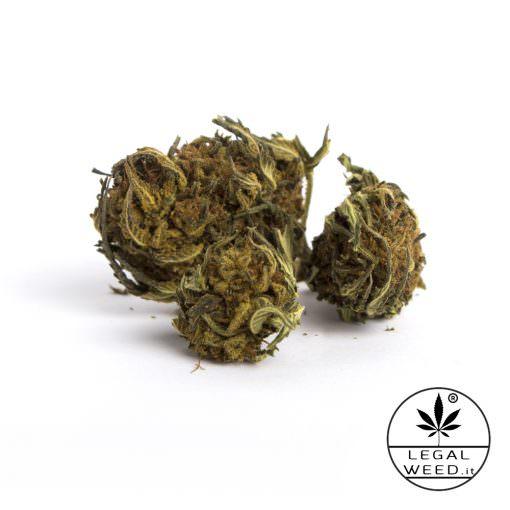 wild altea cannabis light legal weed