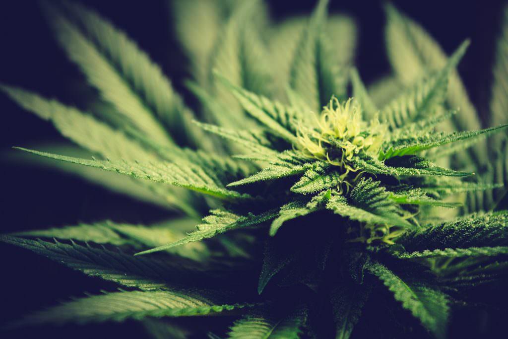 Coca-Cola sta creando una bibita a base di cannabis