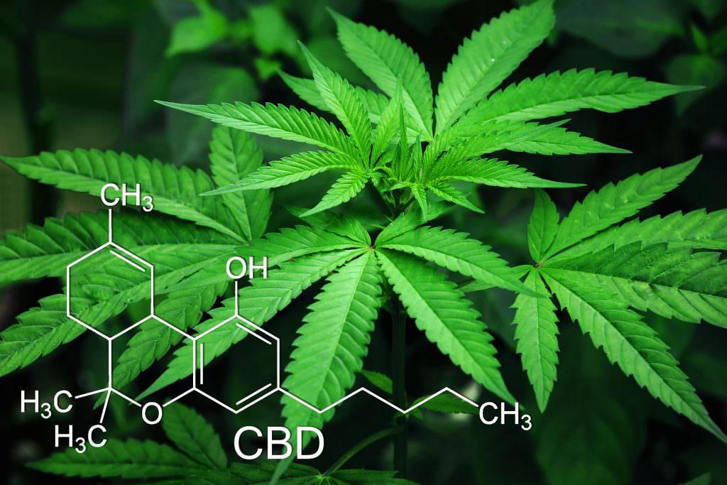 L utilizzo terapeutico della cannabis il CBD