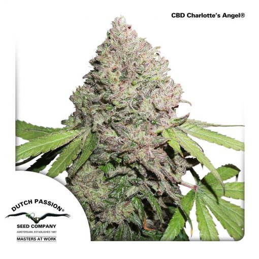 Charlotte's Angel Legal Weed