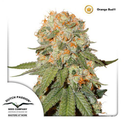 Orange Bud Legal Weed