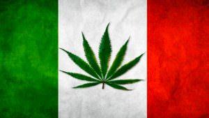 Cannabis in parlamento nuove proposte Pd e M5S uniti sulla legalizzazione