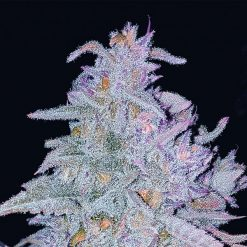 legal weed Auto Strawberry Grape