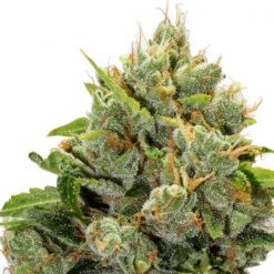 legal weed Grizzly Breathe