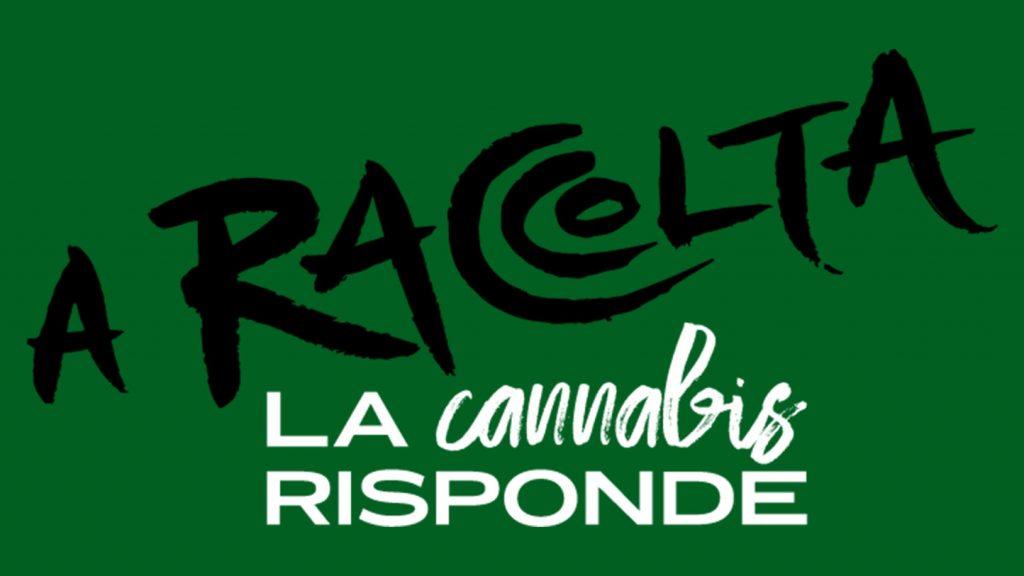 A RACCOLTA! La cannabis risponde Legal Weed c'è!