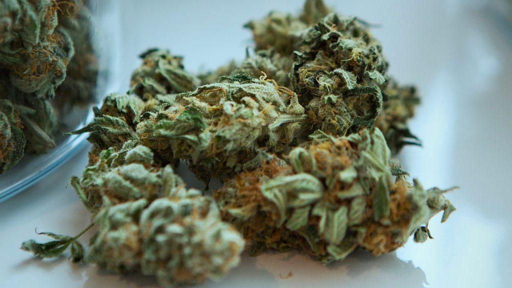 Legal Weed congratulazioni dall'Olanda