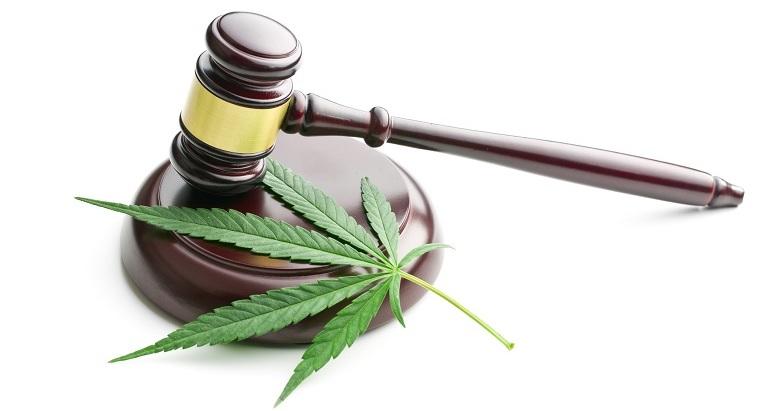 Il futuro della commercializzazione della Cannabis Light dopo le sezioni unite