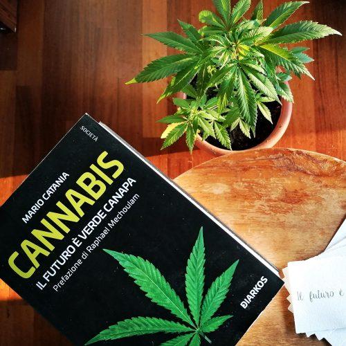il futuro è verde canapa by legal weed